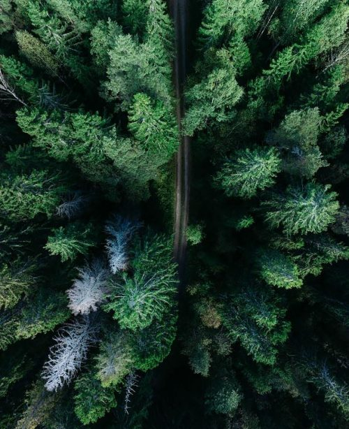 A colour overhead photo of a pine forest used in the corporate social responsibility section of the Westhill investments website.